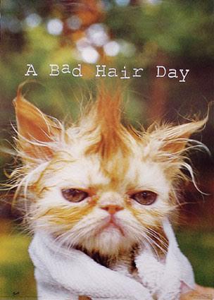 A Bad Hair Day Beauty